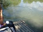 Er wollte unbeding in die Stauden.