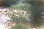 Der Lafnitztumpf – Fritzmühle in Rudersdorf. Nicht ratsam, jetzt bei Hochwasser das Notklo zu benutzen, obwohl die Fische hier sicher warten, oder ;-)
